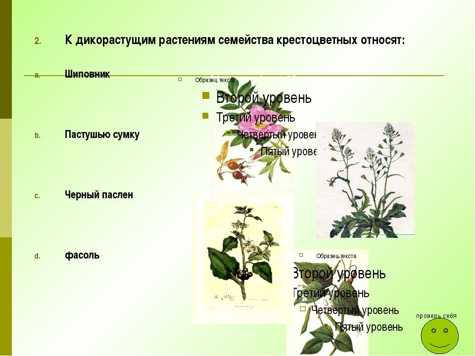К дикорастущим растениям семейства крестоцветных относят: Шиповник Пастушью с...