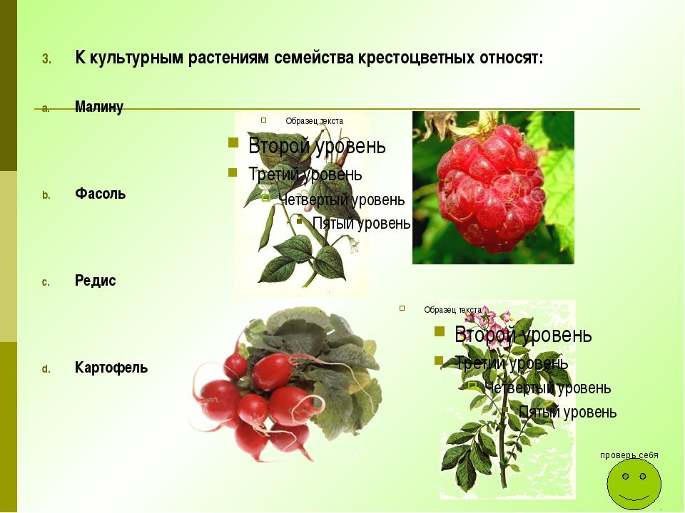 К культурным растениям семейства крестоцветных относят: Малину Фасоль Редис К...