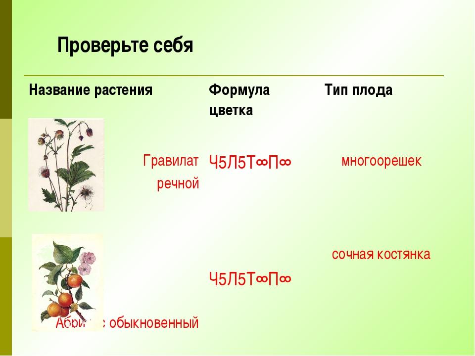 Проверьте себя Название растения Формула цветка Тип плода Гравилат речной Ч5Л...