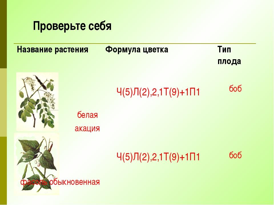 Проверьте себя Название растения Формула цветка Тип плода белая акация Ч(5)Л(...