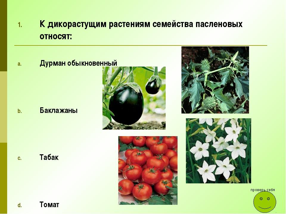 К дикорастущим растениям семейства пасленовых относят: Дурман обыкновенный Ба...