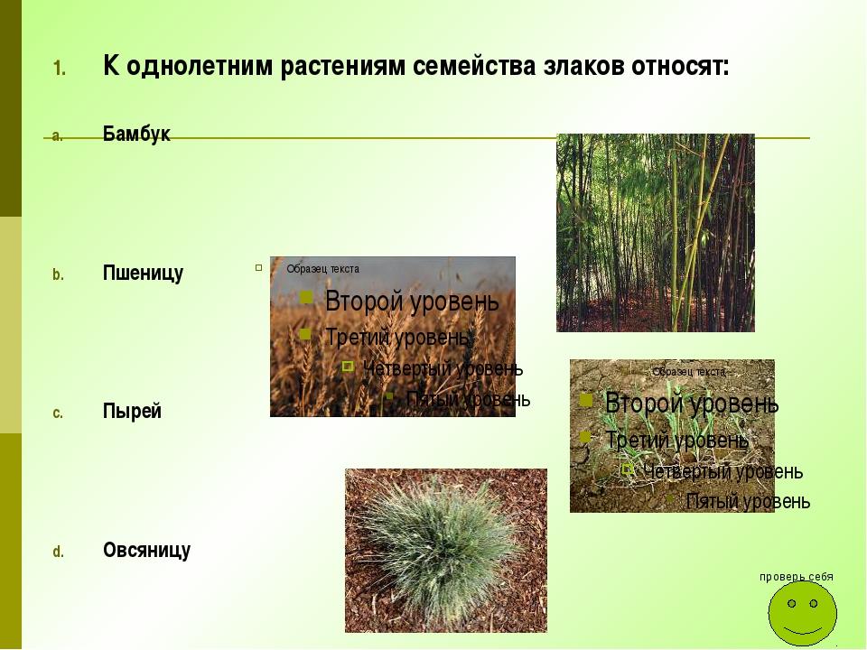 К однолетним растениям семейства злаков относят: Бамбук Пшеницу Пырей Овсяниц...