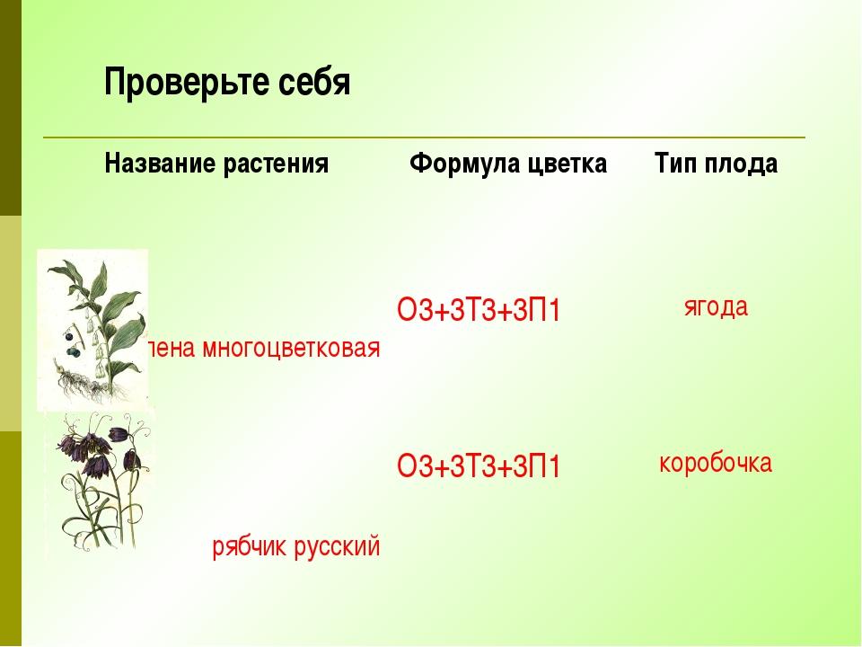 Проверьте себя Название растения Формула цветка Тип плода купена многоцветков...