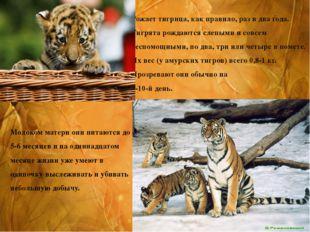 Рожает тигрица, как правило, раз в два года. Тигрята рождаются слепыми и совс