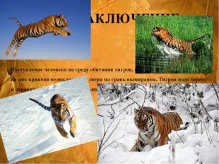 Наступление человека на среду обитания тигров, а также интенсивная охота на н