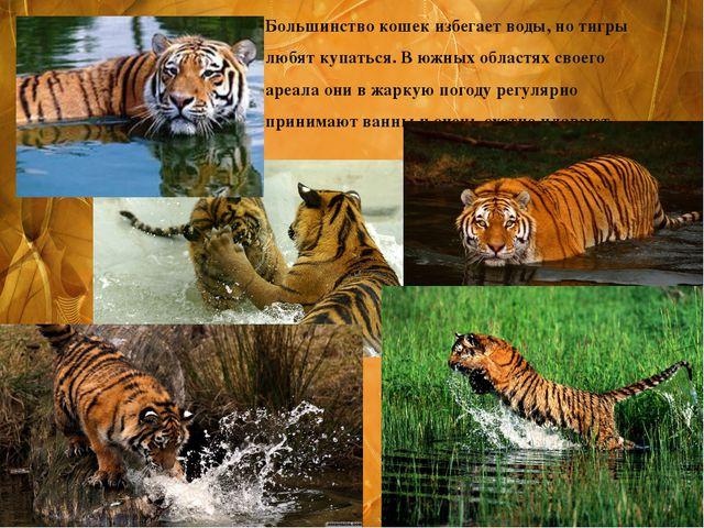 Большинство кошек избегает воды, но тигры любят купаться. В южных областях св...