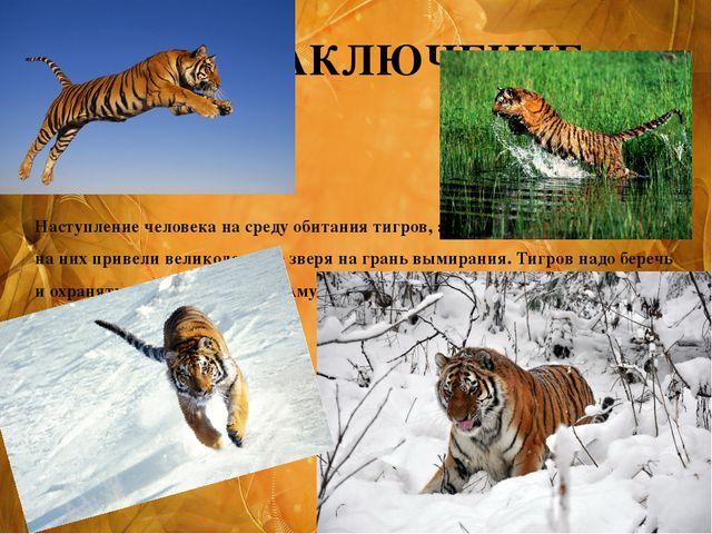Наступление человека на среду обитания тигров, а также интенсивная охота на н...