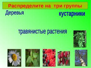 Распределите на три группы