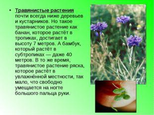 Травянистые растения почти всегда ниже деревьев и кустарников. Но такое травя