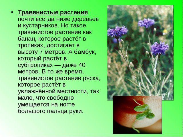 Травянистые растения почти всегда ниже деревьев и кустарников. Но такое травя...