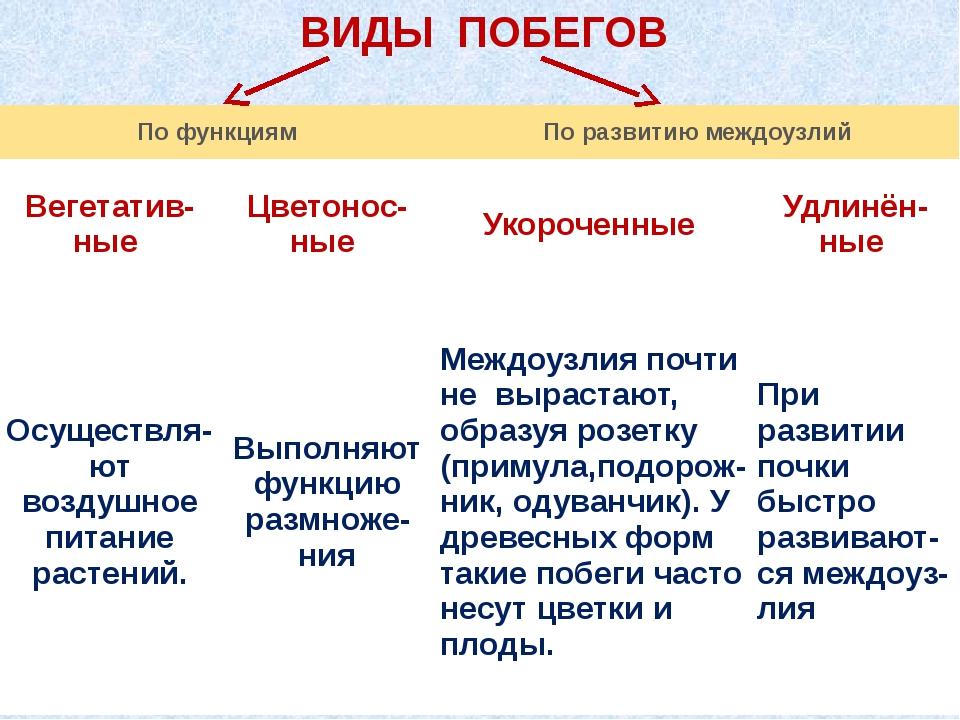 ВИДЫ ПОБЕГОВ По функциям По развитию междоузлий Вегетатив- ные Цветонос- ные...