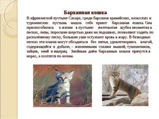 Барханная кошка В африканской пустыне Сахаре, среди барханов аравийских, каз
