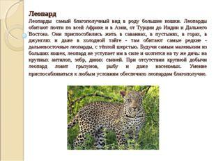 Леопард Леопарды самый благополучный вид в роду большие кошки. Леопарды обит