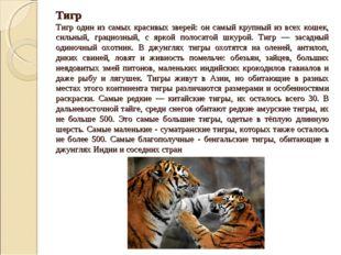 Тигр Тигр один из самых красивых зверей: он самый крупный из всех кошек, силь