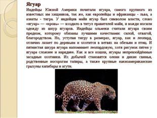 Ягуар Индейцы Южной Америки почитали ягуара, самого крупного из известных им