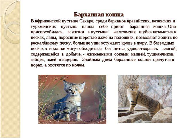Барханная кошка В африканской пустыне Сахаре, среди барханов аравийских, каз...