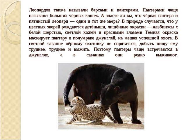 Леопардов также называли барсами и пантерами. Пантерами чаще называют больших...