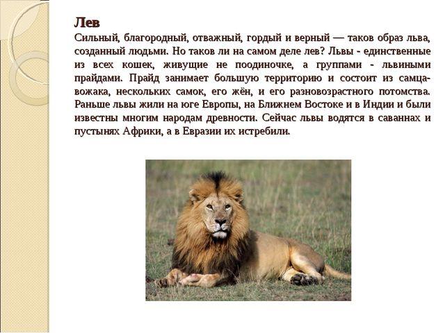 Лев Сильный, благородный, отважный, гордый и верный — таков образ льва, созд...