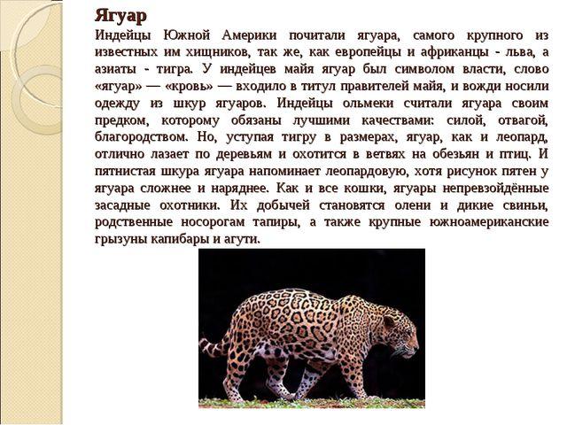 Ягуар Индейцы Южной Америки почитали ягуара, самого крупного из известных им...