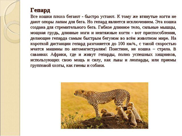 Гепард Все кошки плохо бегают - быстро устают. К тому же втянутые когти не да...