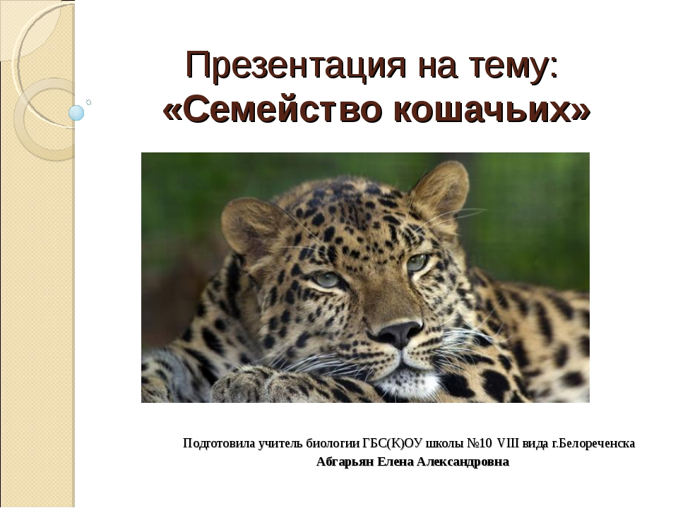 Презентация на тему: «Семейство кошачьих» Подготовила учитель биологии ГБС(К...