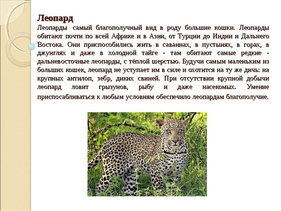 Леопард Леопарды самый благополучный вид в роду большие кошки. Леопарды обит...