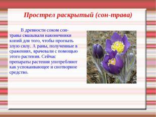 Прострел раскрытый (сон-трава) В древности соком сон-травы смазывали наконеч