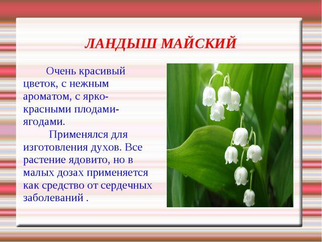 ЛАНДЫШ МАЙСКИЙ Очень красивый цветок, с нежным ароматом, с ярко-красными пло...