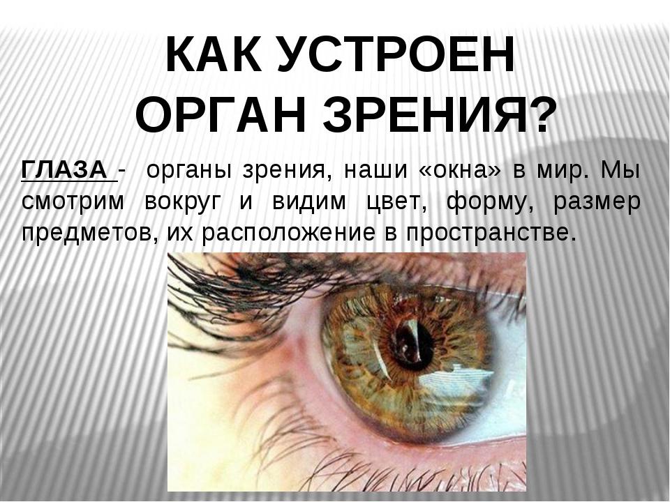 КАК УСТРОЕН ОРГАН ЗРЕНИЯ? ГЛАЗА - органы зрения, наши «окна» в мир. Мы смотри...