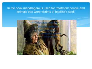 In the book mandragora is used for treatment people and animals that were vic