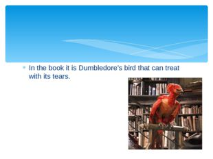 In the book it is Dumbledore's bird that can treat with its tears.