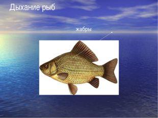 Дыхание рыб жабры