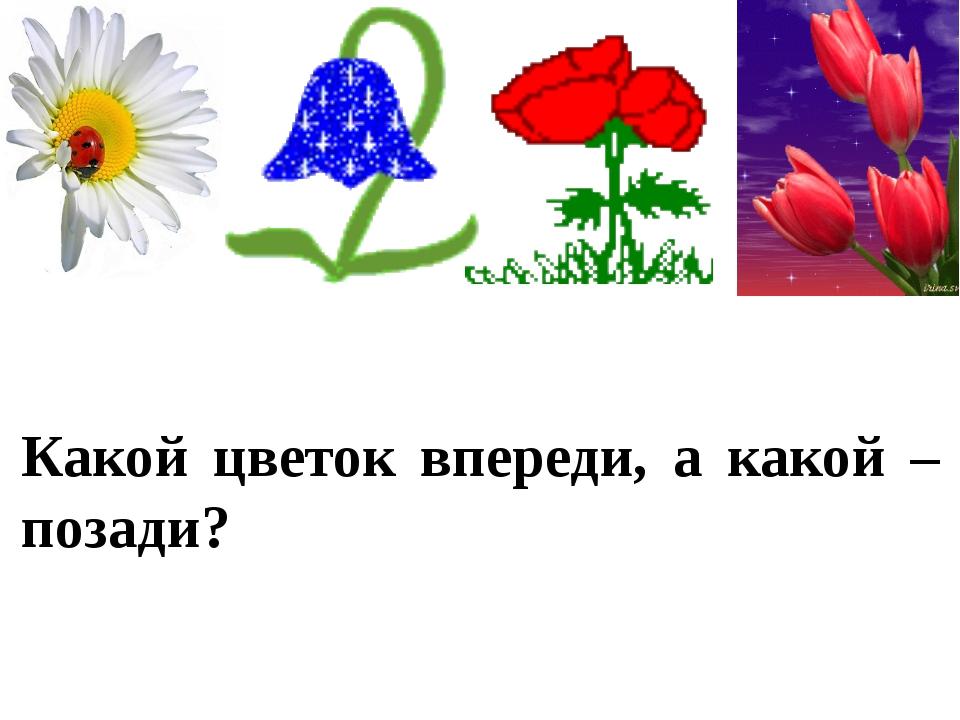 Какой цветок впереди, а какой – позади?