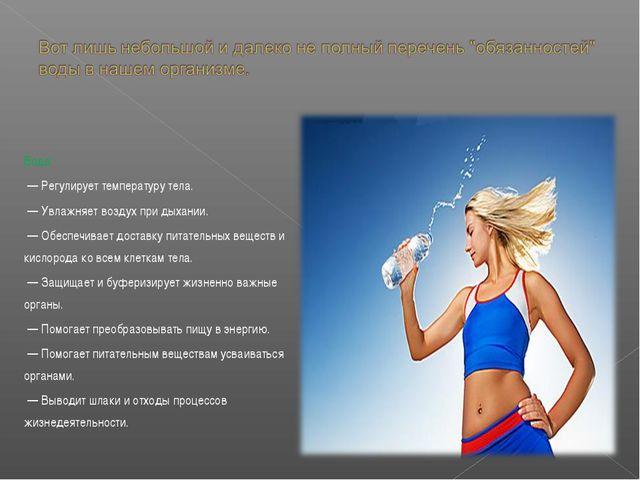 Вода: — Регулирует температуру тела. — Увлажняет воздух при дыхании. — Обеспе...