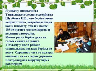 Я узнал у специалиста Таштыпского лесного хозяйства Шулбаева Н.В., что берёза