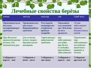 Лечебные свойства берёзы почки листья пыльцасокГриб чага Противовоспалите