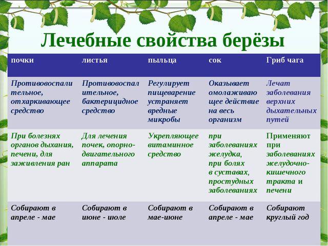 Лечебные свойства берёзы почки листья пыльцасокГриб чага Противовоспалите...