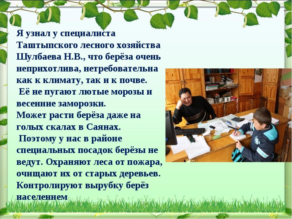 Я узнал у специалиста Таштыпского лесного хозяйства Шулбаева Н.В., что берёза...