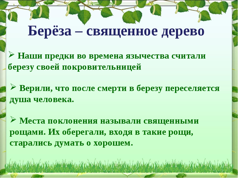 Берёза – священное дерево Верили, что после смерти в березу переселяется душа...