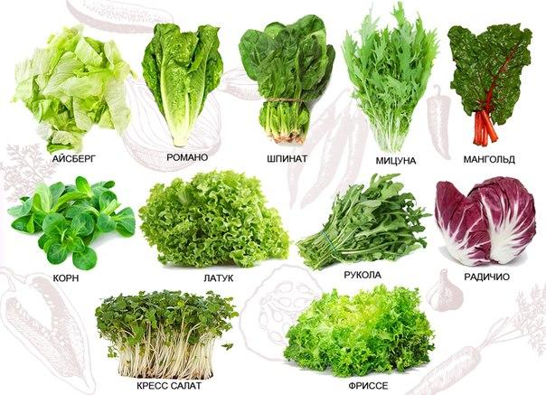 ТОП30 / Рецепты Рецепты_домохозяек: Кресс-салат.Пряности для подоконника