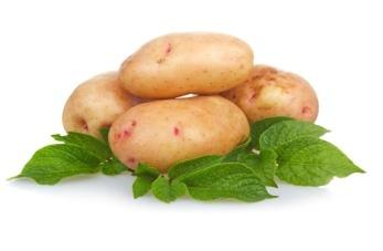 Картофель Тамбовский