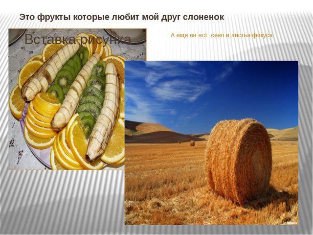 Это фрукты которые любит мой друг слоненок А еще он ест сено и листья фикуса