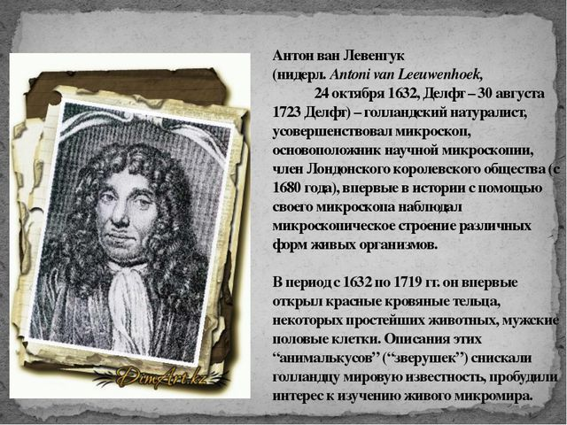 Антон ван Левенгук (нидерл. Antoni van Leeuwenhoek, 24 октября 1632, Делфт –...