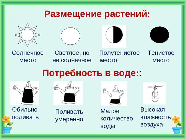 Размещение растений: Потребность в воде:: Солнечное место Светлое, но не солн...