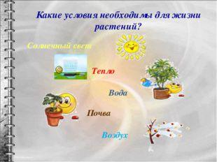 Какие условия необходимы для жизни растений? Тепло Вода Почва Солнечный свет