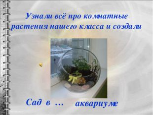 Узнали всё про комнатные растения нашего класса и создали аквариуме Сад в …