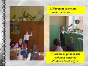 1. Изучили растения своего класса, с помощью родителей собрали каталог «Мой