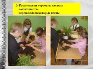 3. Рассмотрели корневую систему наших цветов, пересадили некоторые цветы
