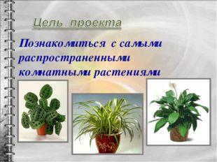 Познакомиться с самыми распространенными комнатными растениями