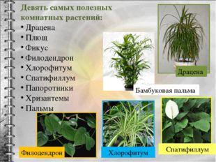 Девять самых полезных комнатных растений: Драцена Плющ Фикус Филодендрон Хлор